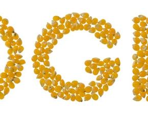 Maïs OGM: l'Agence Européenne de Sécurité Alimentaire génétiquementmanipulée